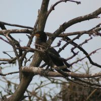 Cormorant in Tree at Gatorland Florida